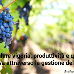 Modulate vigor, productivity and grape quality through soil management