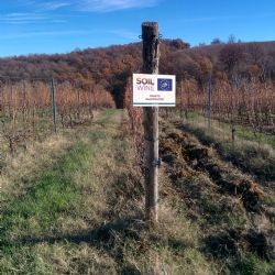 Demonstrative vineyard_TBC1