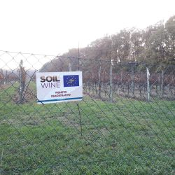 Demonstrative vineyard_TBC2