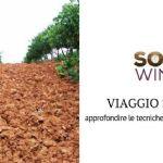 Approfondimento sulle tecniche di gestione del suolo in Provenza e Valle del Rodano